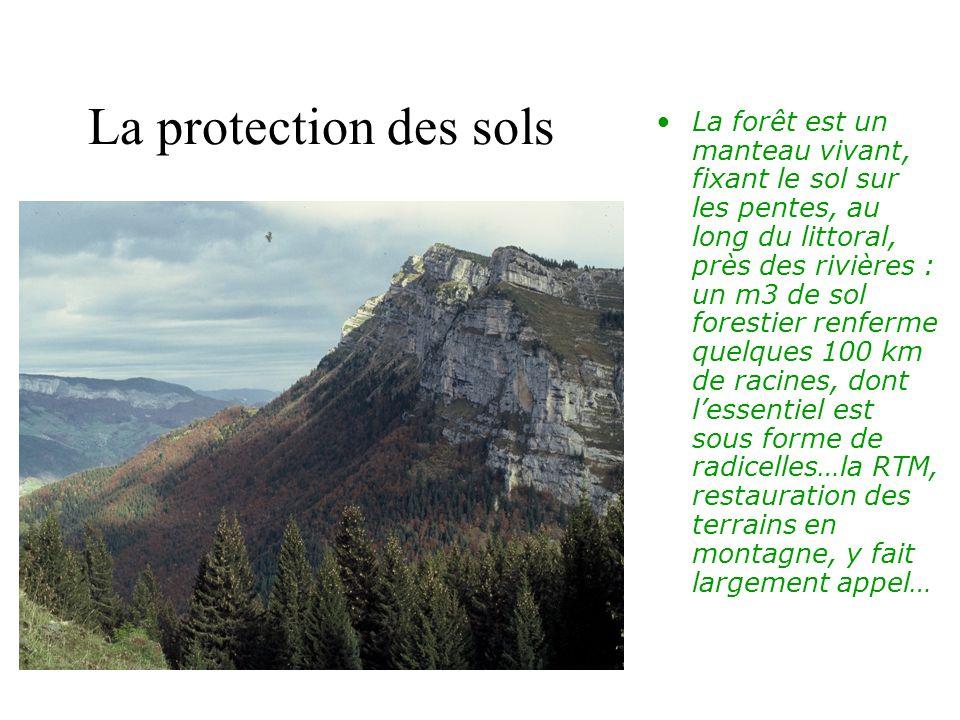 La forêt est un manteau vivant, fixant le sol sur les pentes, au long du littoral, près des rivières : un m3 de sol forestier renferme quelques 100 km de racines, dont l'essentiel est sous forme de radicelles…la RTM, restauration des terrains en montagne, y fait largement appel…