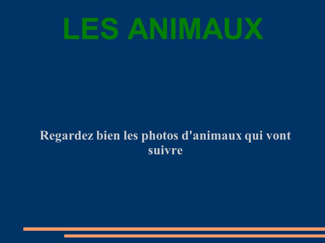 Regardez bien les photos d animaux qui vont suivre