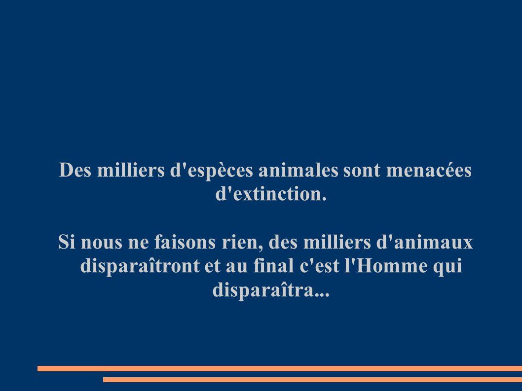 Des milliers d espèces animales sont menacées d extinction.