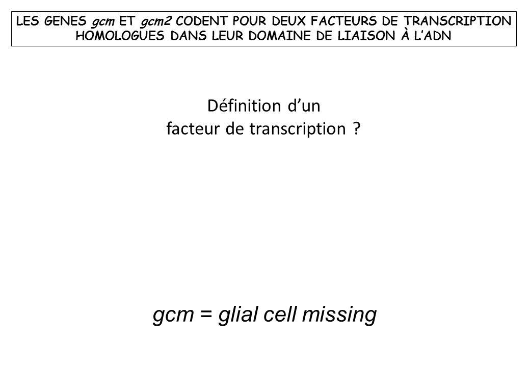 gcm = glial cell missing