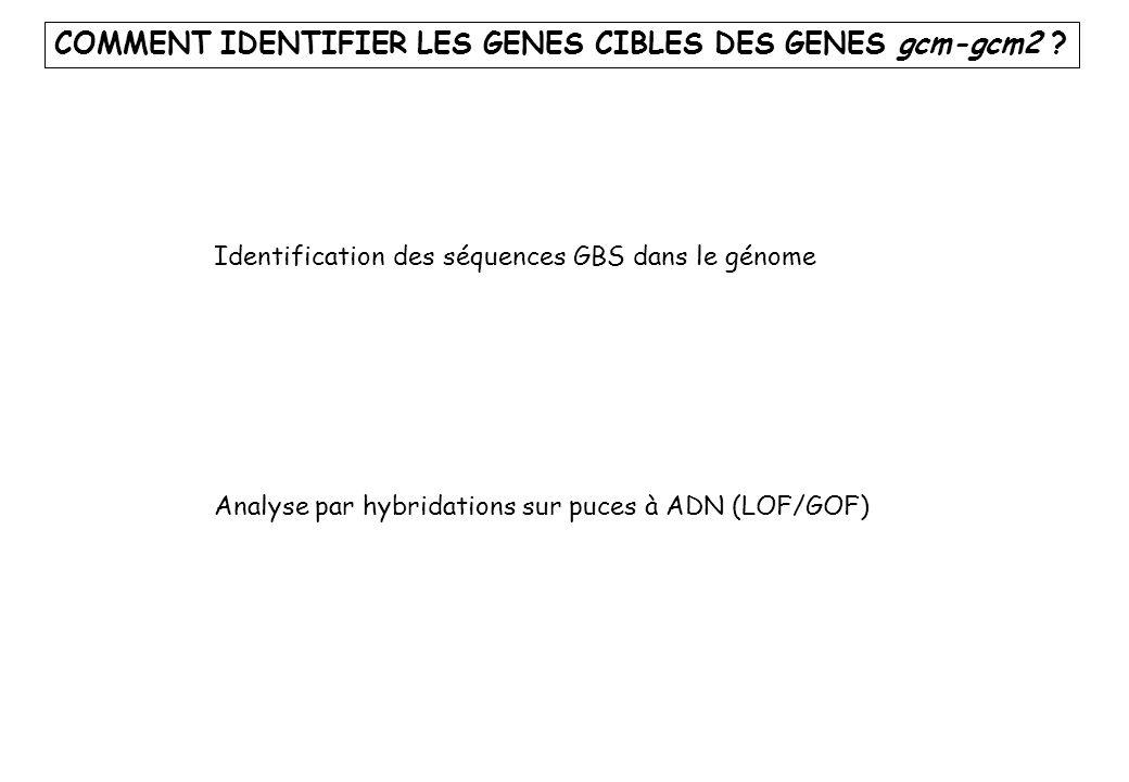 COMMENT IDENTIFIER LES GENES CIBLES DES GENES gcm-gcm2
