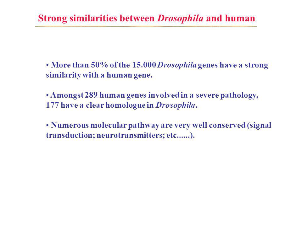 Strong similarities between Drosophila and human