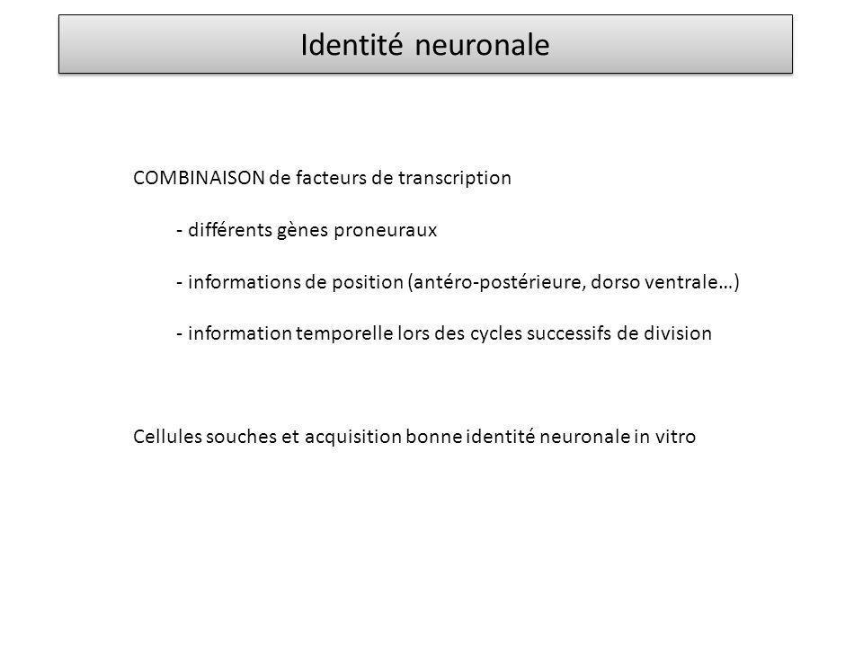 Identité neuronale COMBINAISON de facteurs de transcription