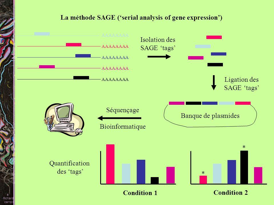 La méthode SAGE ('serial analysis of gene expression')