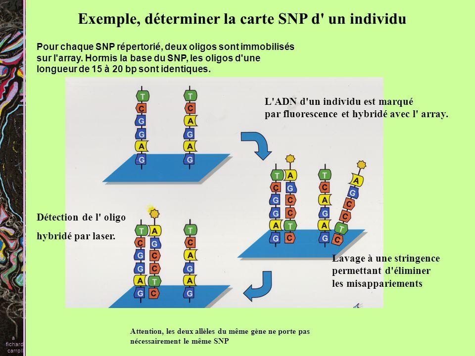 Exemple, déterminer la carte SNP d un individu