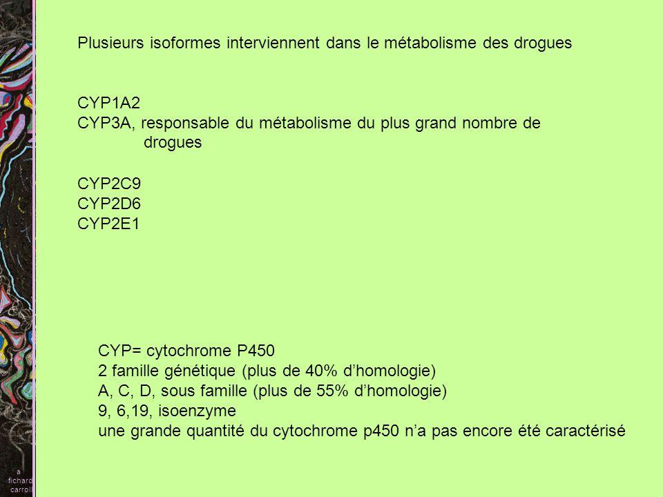 Plusieurs isoformes interviennent dans le métabolisme des drogues