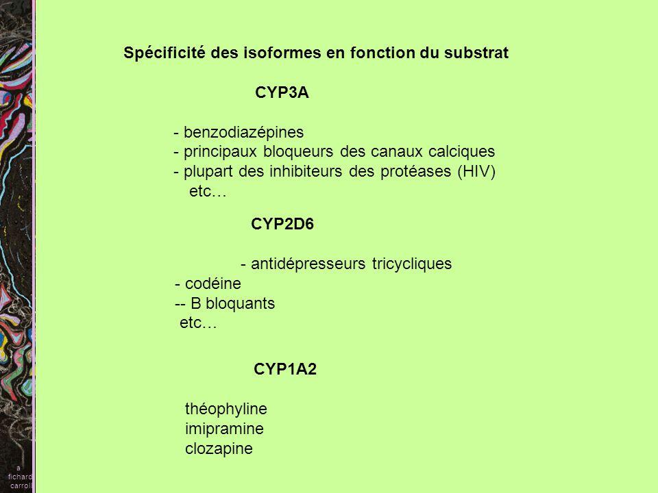 Spécificité des isoformes en fonction du substrat CYP3A