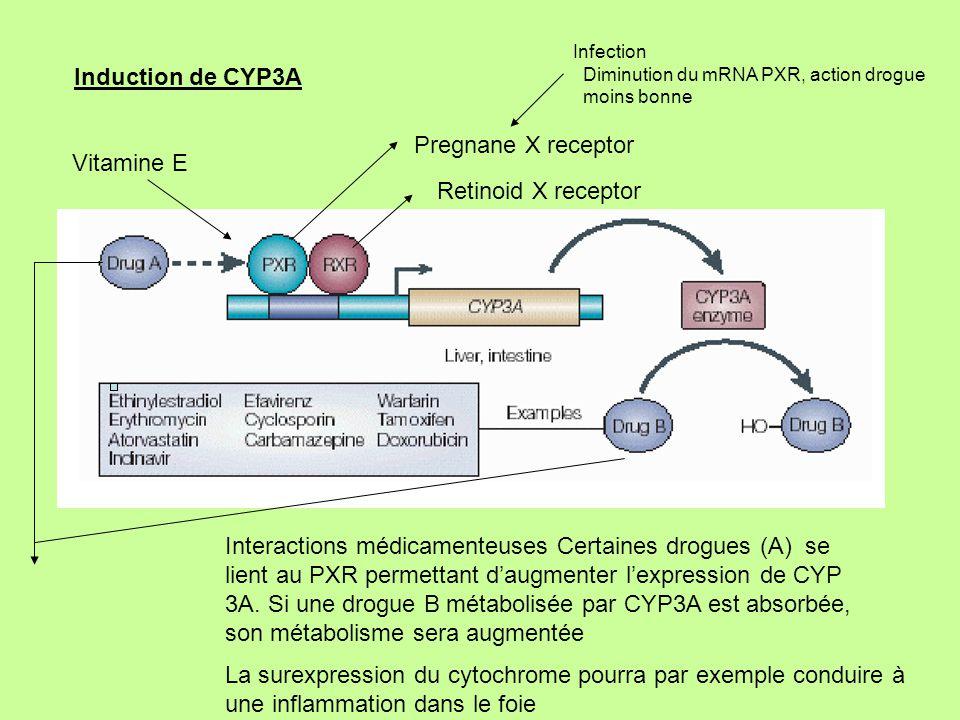 La surexpression du cytochrome pourra par exemple conduire à
