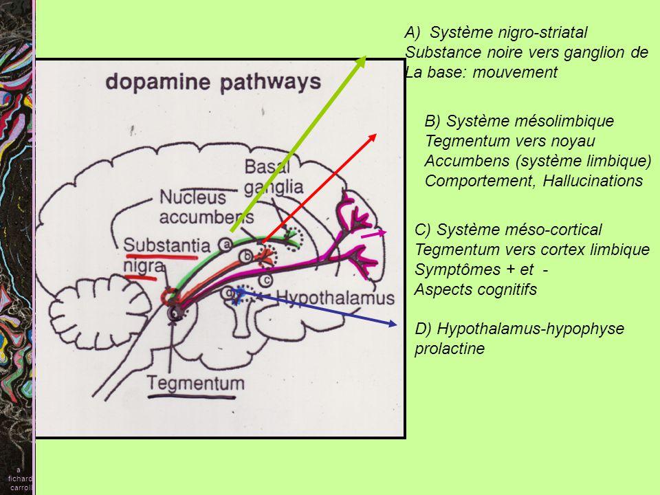 Système nigro-striatal Substance noire vers ganglion de