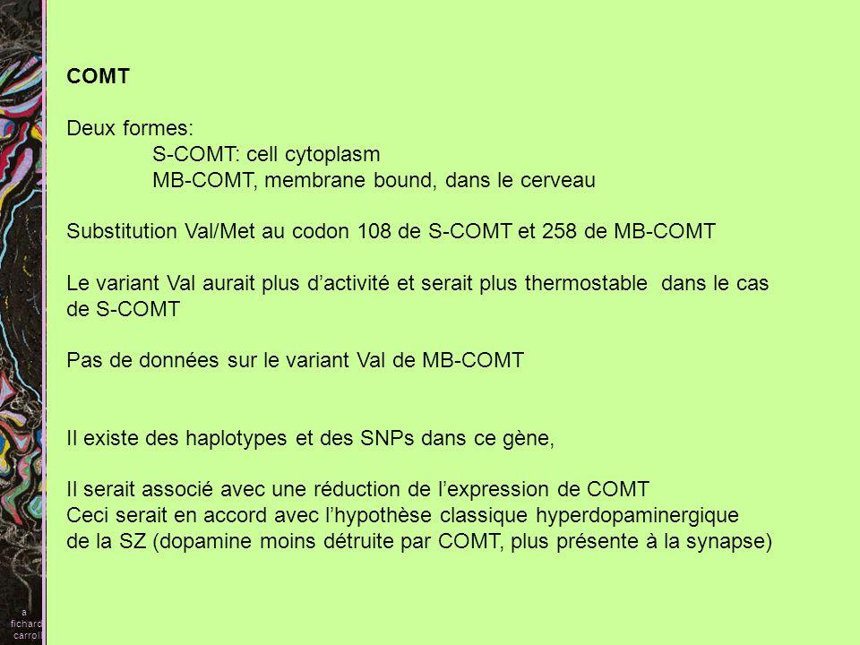 S-COMT: cell cytoplasm MB-COMT, membrane bound, dans le cerveau