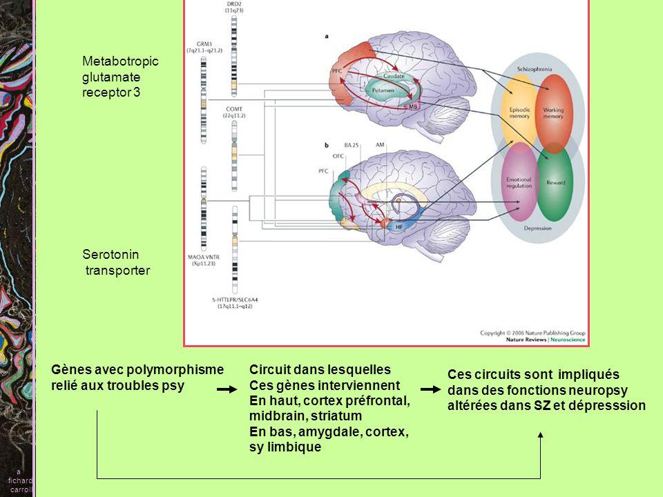 Metabotropic glutamate receptor 3