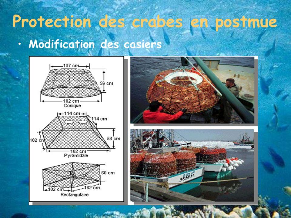 Protection des crabes en postmue