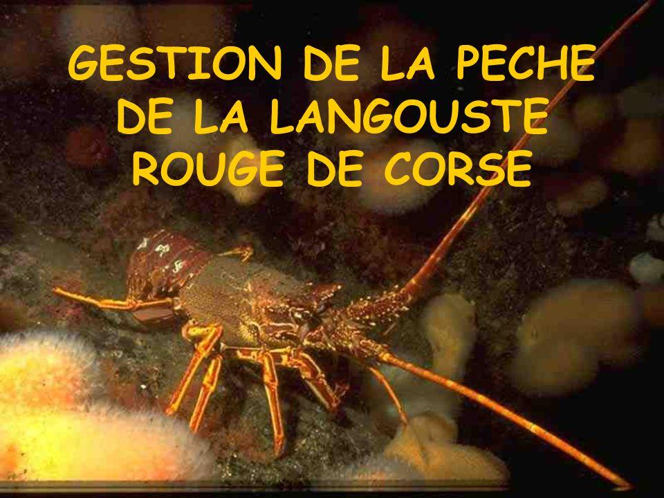GESTION DE LA PECHE DE LA LANGOUSTE ROUGE DE CORSE