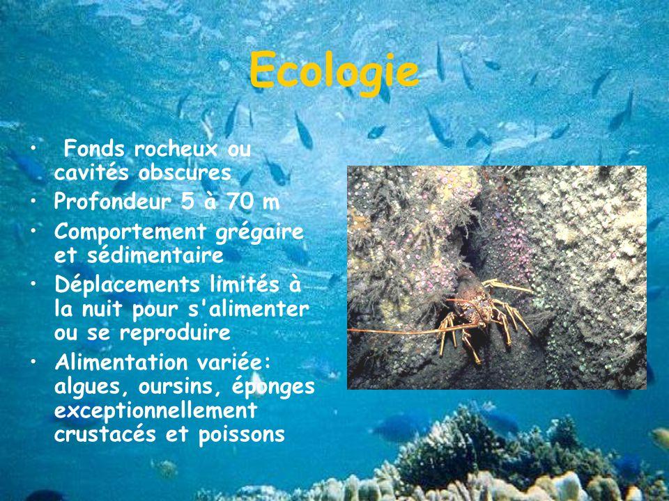Ecologie Fonds rocheux ou cavités obscures Profondeur 5 à 70 m