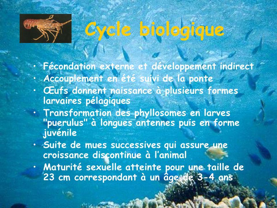 Cycle biologique Fécondation externe et développement indirect