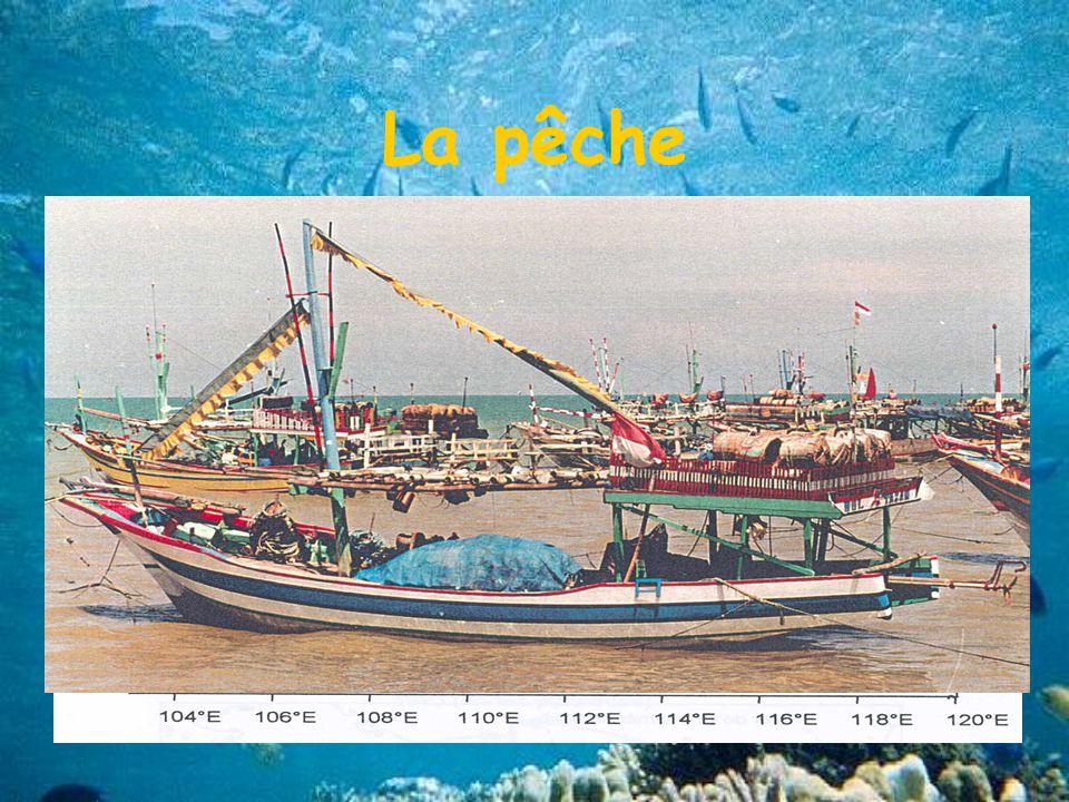 La pêche 2 catégories de pêches Pêche artisanale : mini senneurs
