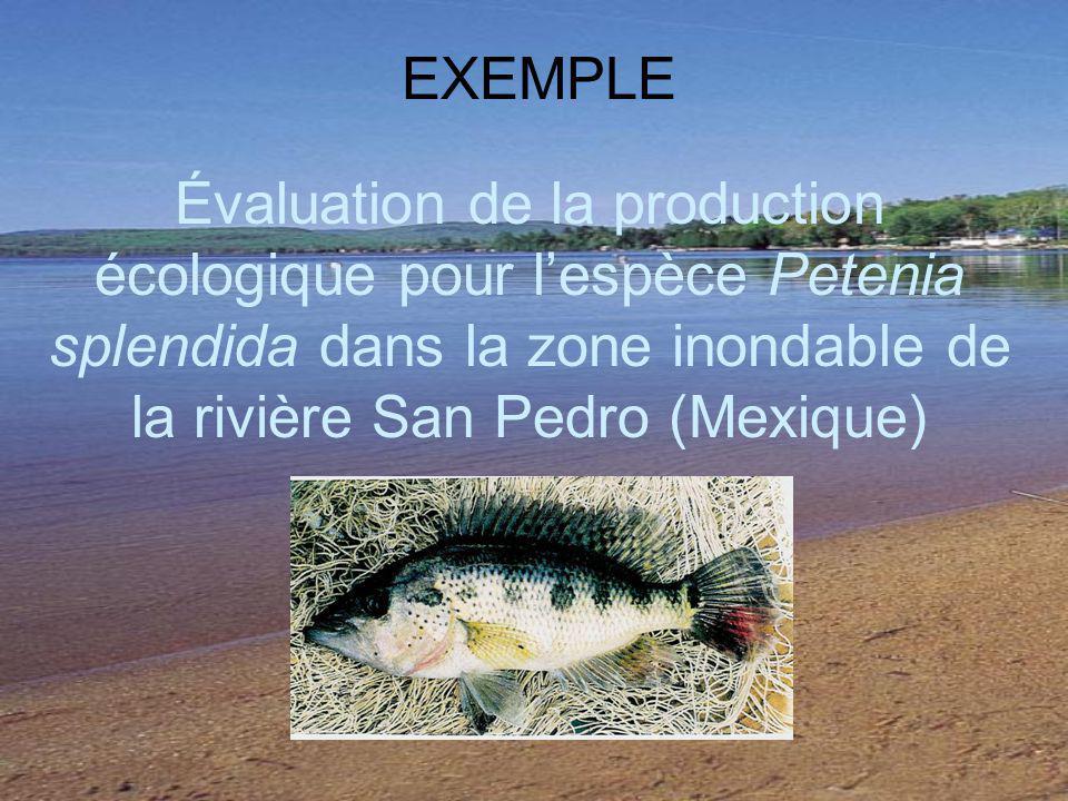 EXEMPLE Évaluation de la production écologique pour l'espèce Petenia splendida dans la zone inondable de la rivière San Pedro (Mexique)