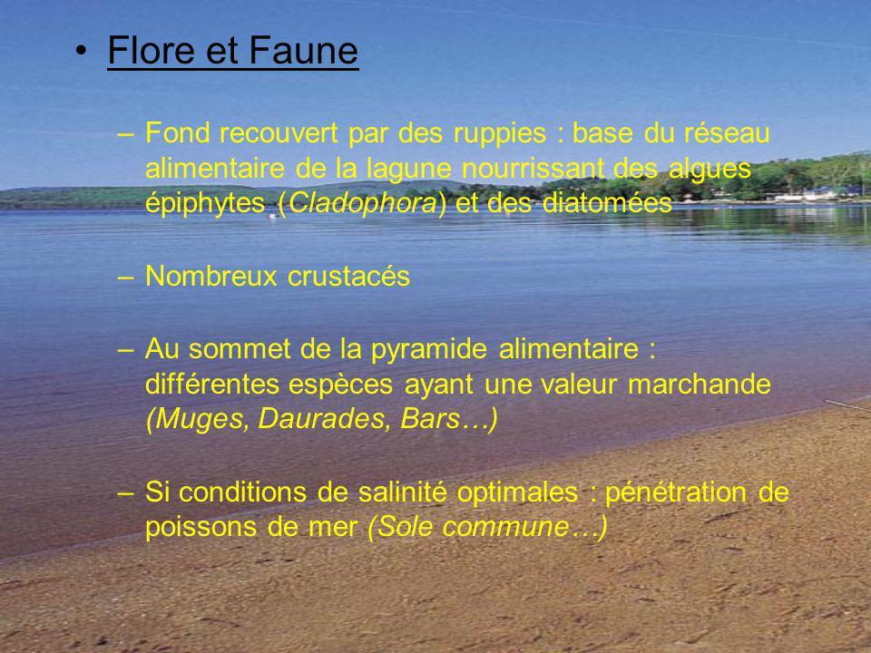 Flore et Faune