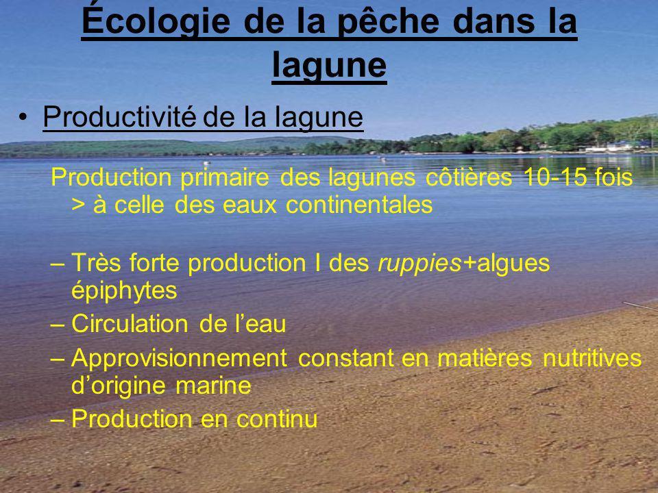 Écologie de la pêche dans la lagune
