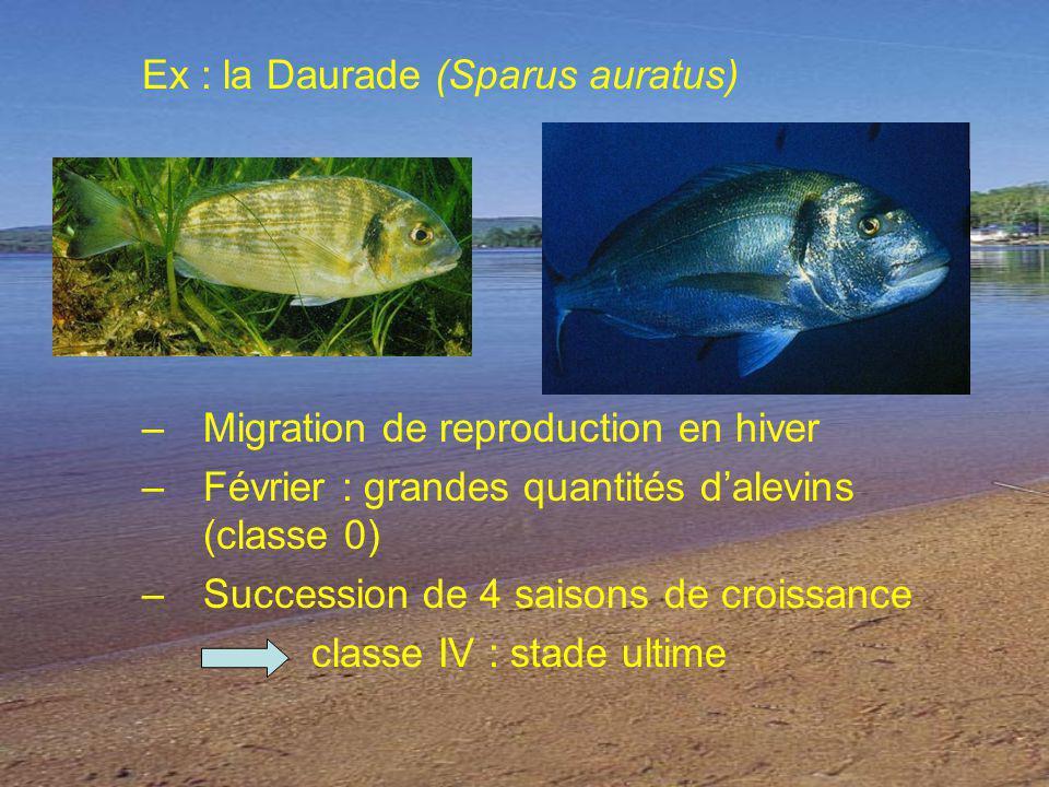 Ex : la Daurade (Sparus auratus)