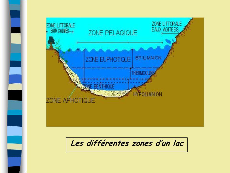 Les différentes zones d'un lac