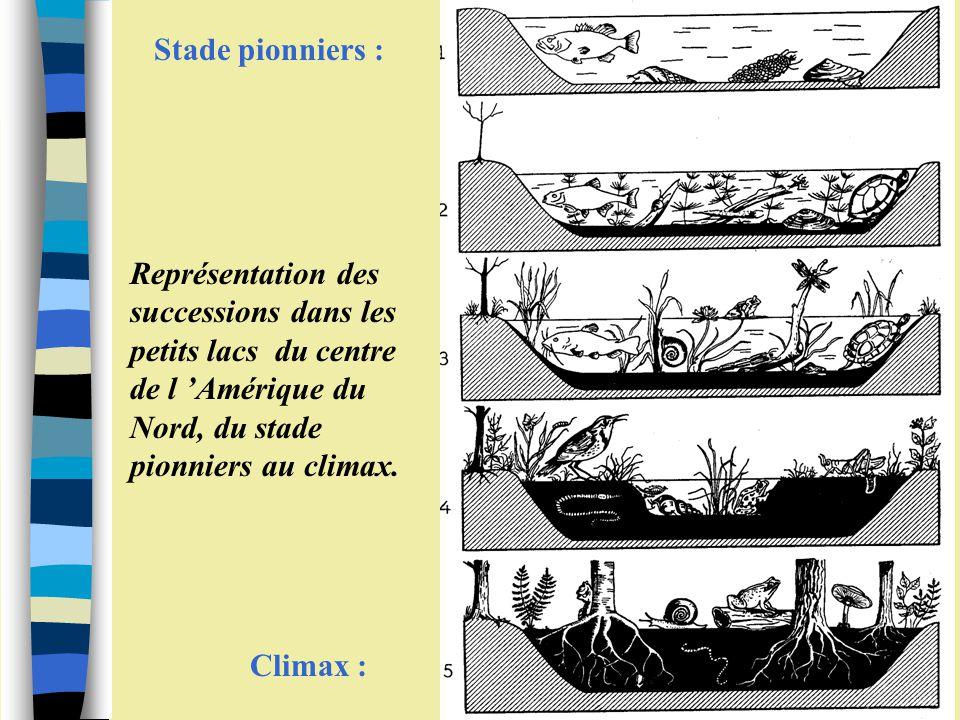 Stade pionniers : Climax : Représentation des successions dans les petits lacs du centre de l 'Amérique du Nord, du stade pionniers au climax.