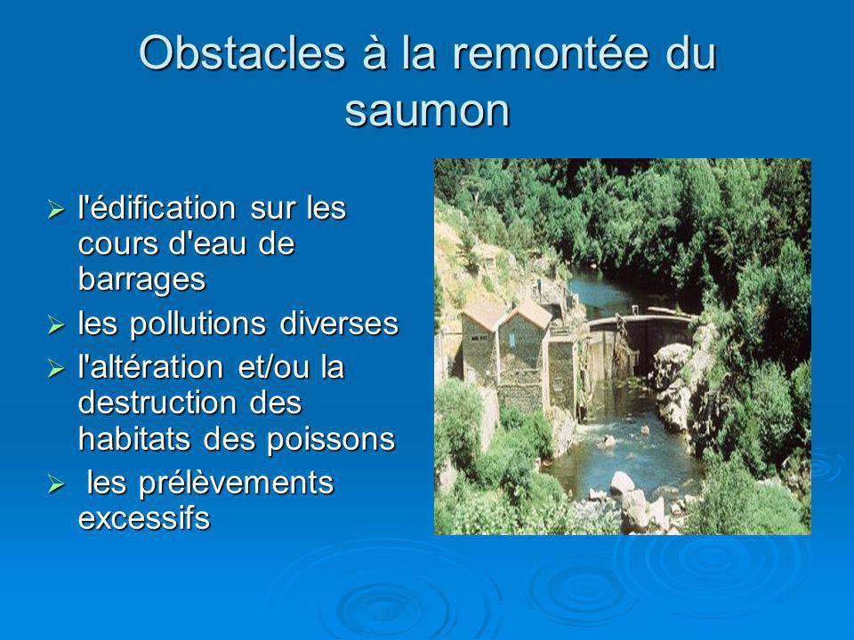 Obstacles à la remontée du saumon