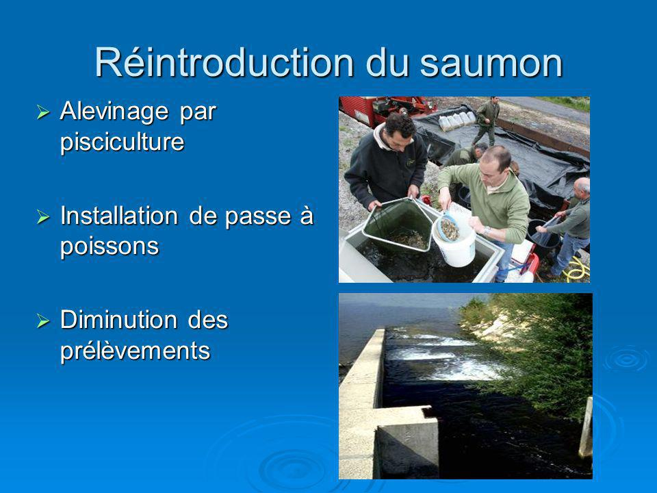 Réintroduction du saumon