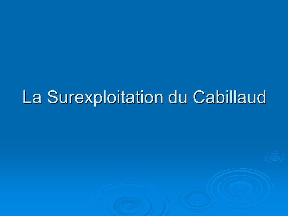 La Surexploitation du Cabillaud
