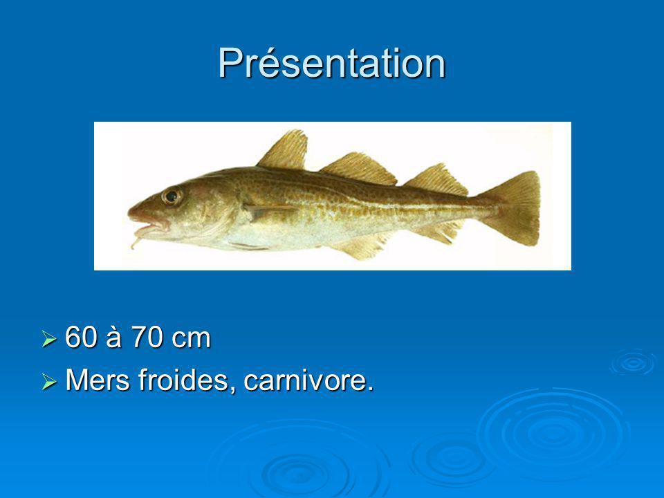 Présentation 60 à 70 cm Mers froides, carnivore.