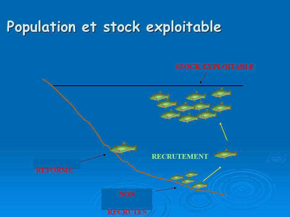 Population et stock exploitable
