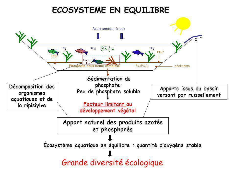 ECOSYSTEME EN EQUILIBRE