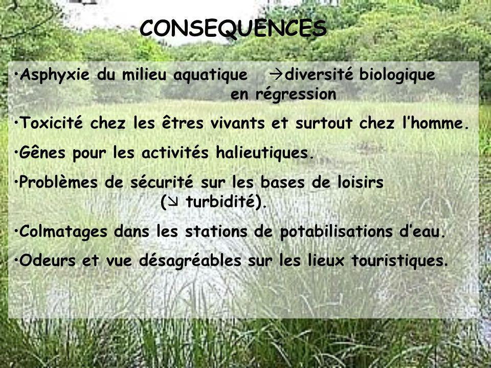 CONSEQUENCES Asphyxie du milieu aquatique diversité biologique en régression. Toxicité chez les êtres vivants et surtout chez l'homme.