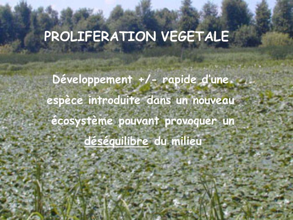 PROLIFERATION VEGETALE