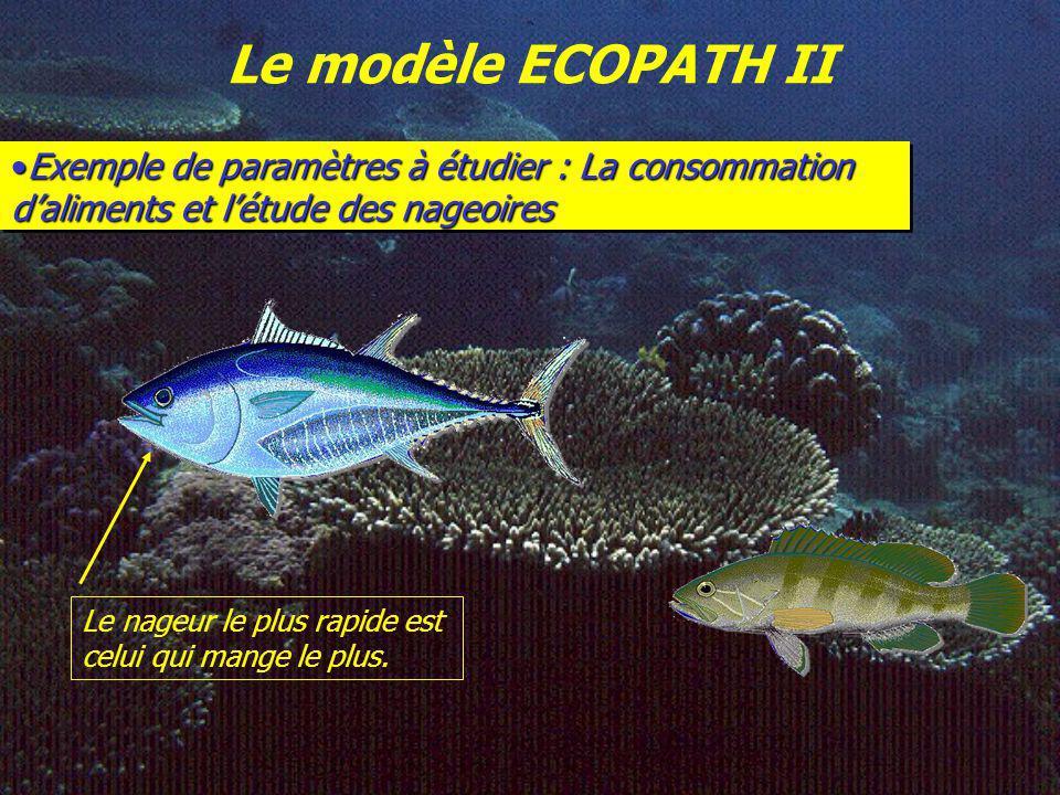Le modèle ECOPATH II Exemple de paramètres à étudier : La consommation d'aliments et l'étude des nageoires.