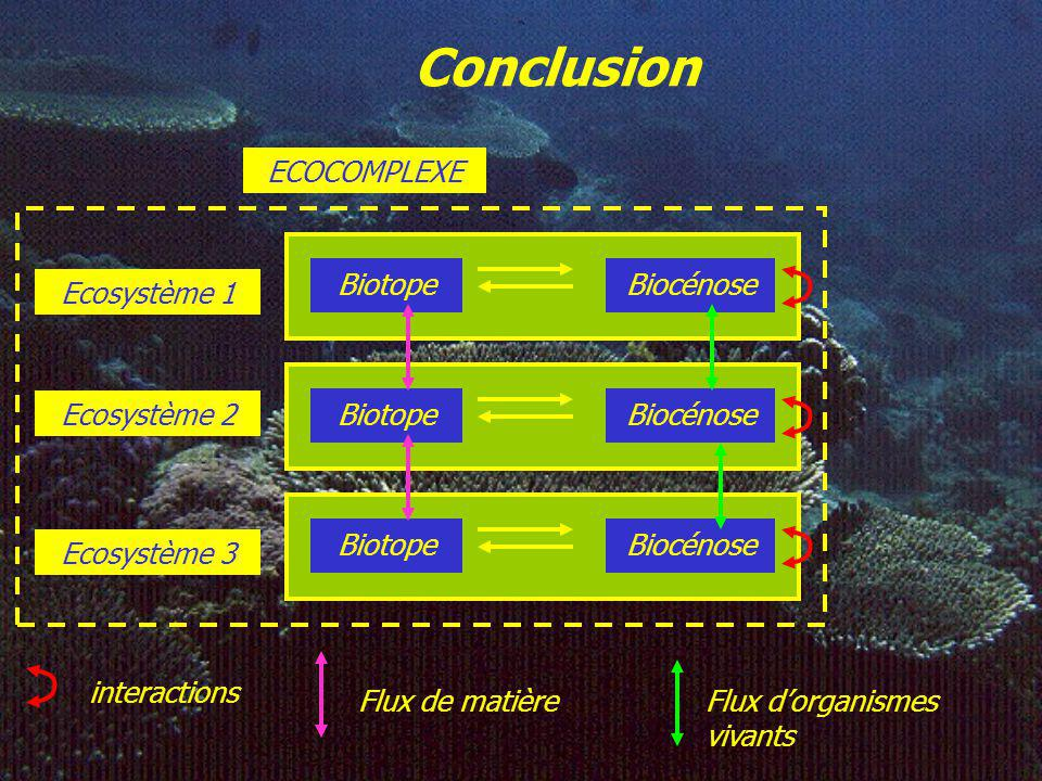 Conclusion ECOCOMPLEXE Biotope Biocénose Ecosystème 1 Biotope