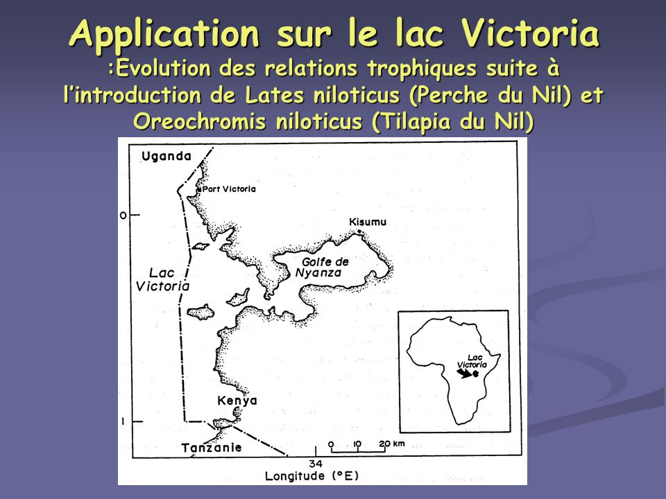 Application sur le lac Victoria :Evolution des relations trophiques suite à l'introduction de Lates niloticus (Perche du Nil) et Oreochromis niloticus (Tilapia du Nil)