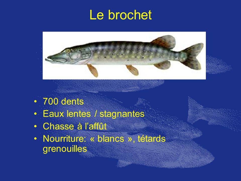 Le brochet 700 dents Eaux lentes / stagnantes Chasse à l'affût