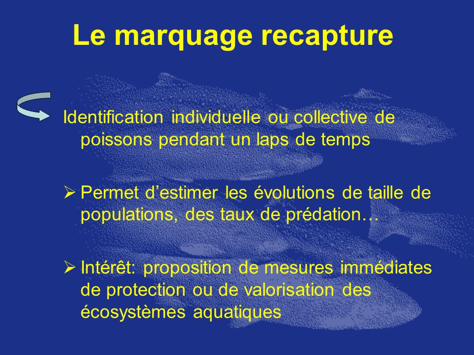 Le marquage recapture Identification individuelle ou collective de poissons pendant un laps de temps.