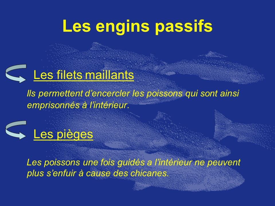 Les engins passifs Les filets maillants