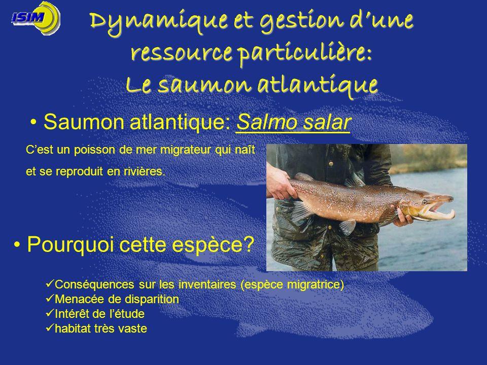 Saumon atlantique: Salmo salar