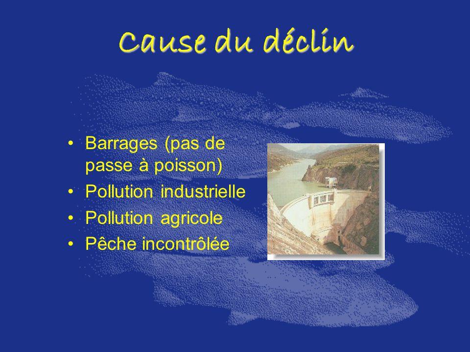 Cause du déclin Barrages (pas de passe à poisson)