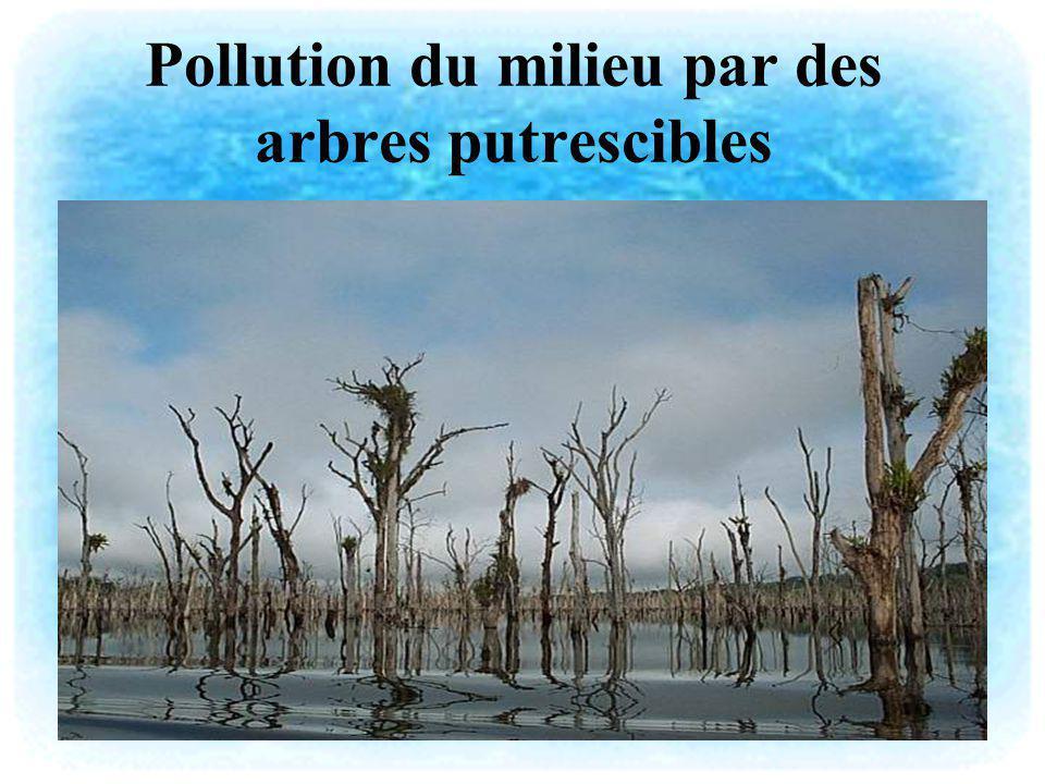 Pollution du milieu par des arbres putrescibles