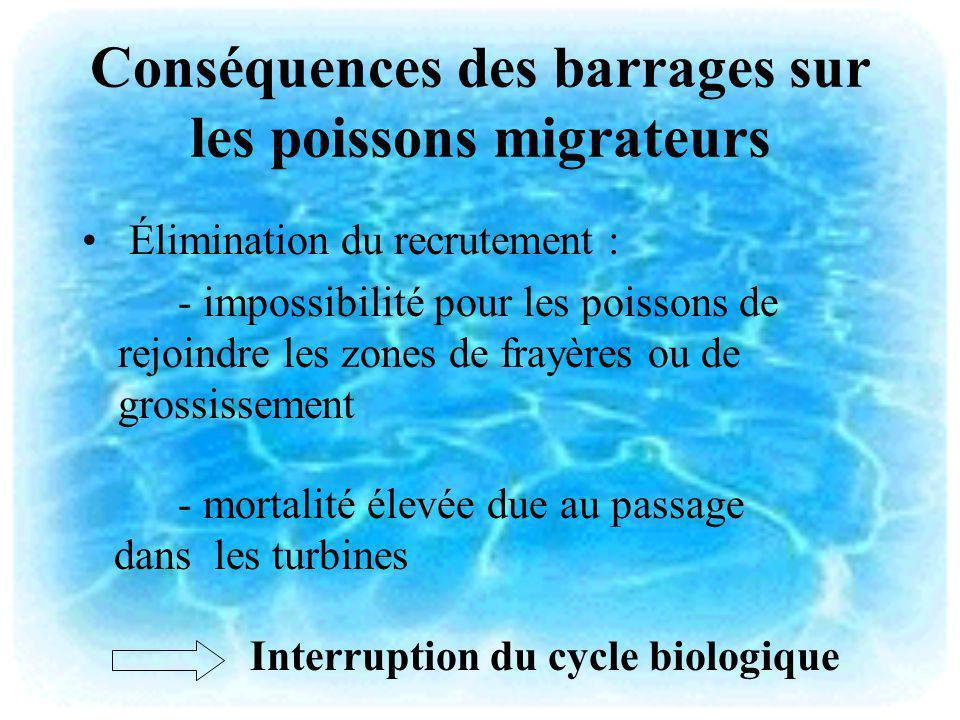 Conséquences des barrages sur les poissons migrateurs