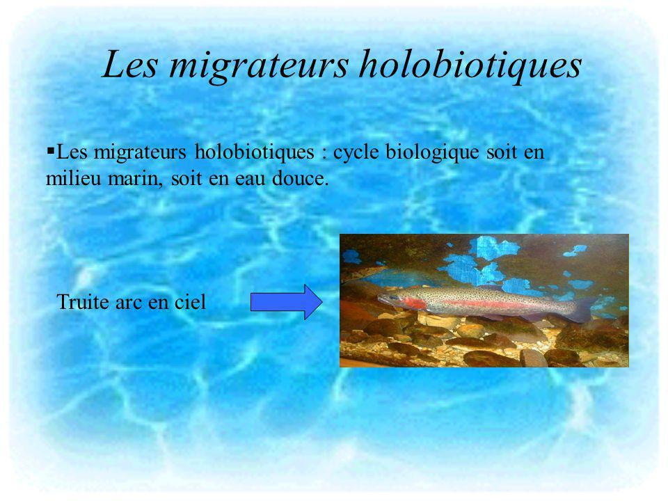 Les migrateurs holobiotiques