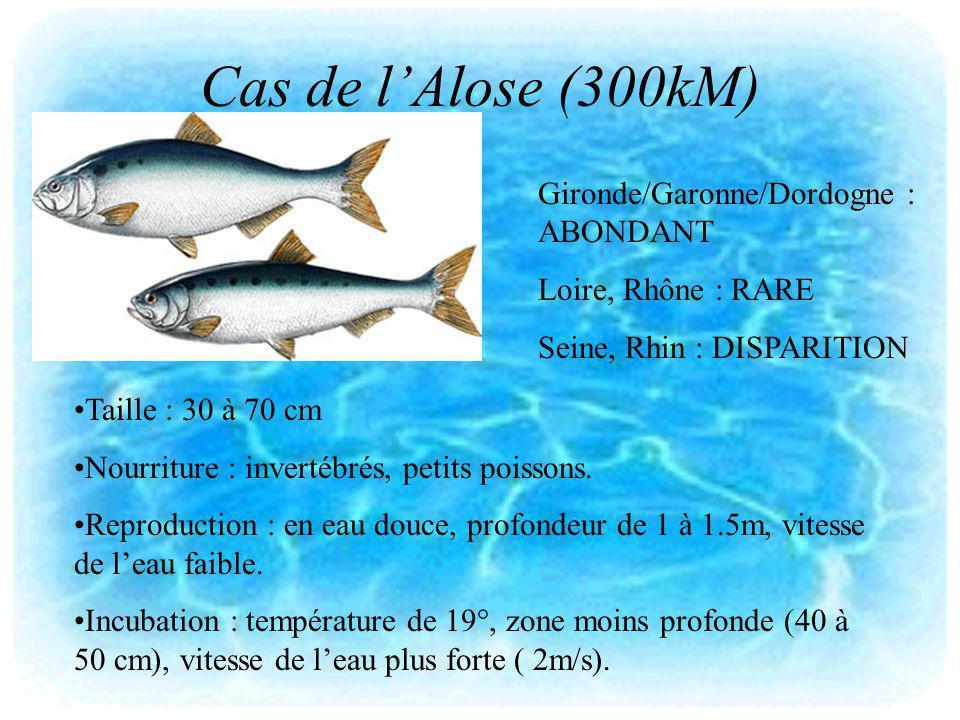 Cas de l'Alose (300kM) Gironde/Garonne/Dordogne : ABONDANT