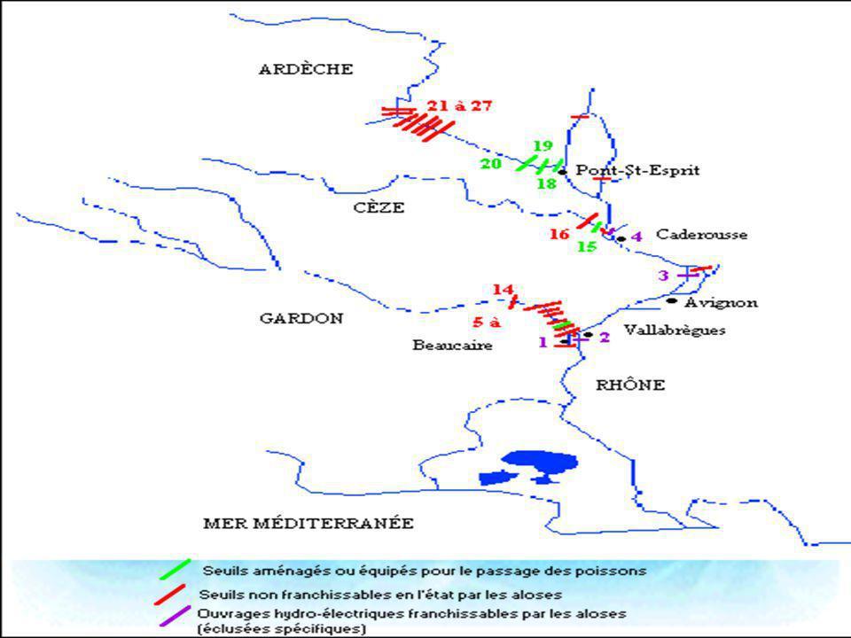 · Bassin du Bas-Rhône