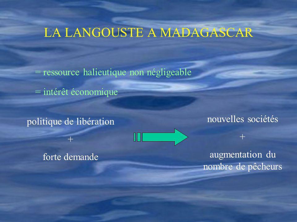 LA LANGOUSTE A MADAGASCAR