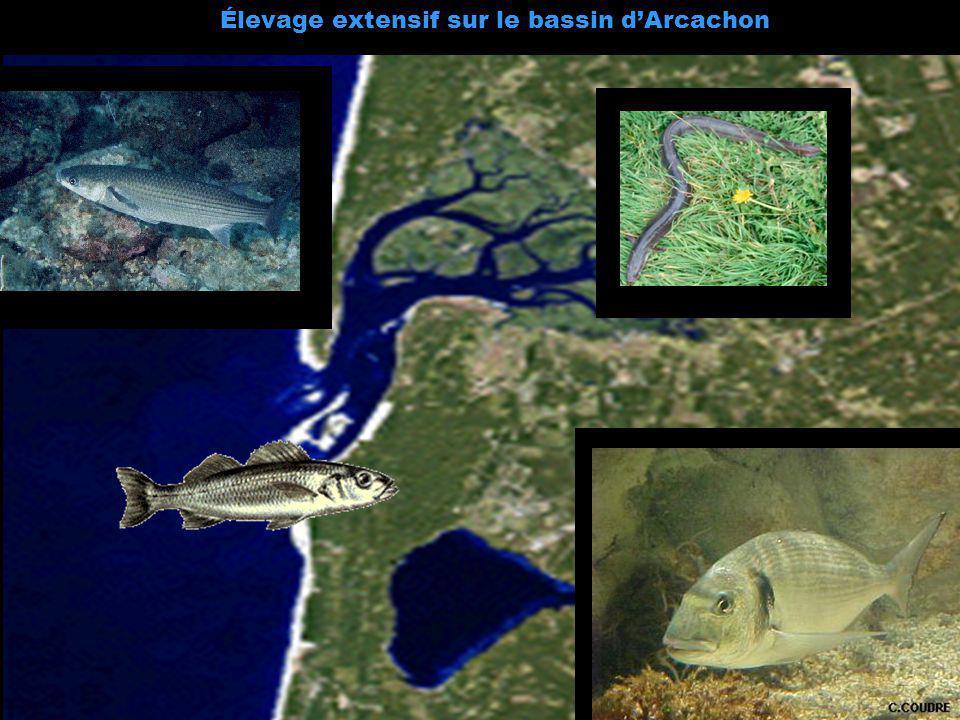 Élevage extensif sur le bassin d'Arcachon