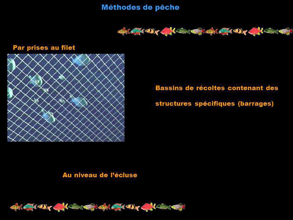 Méthodes de pêche Par prises au filet